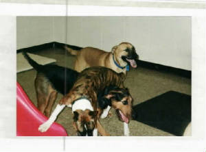 Emmy & Pals at Doggie Day Care